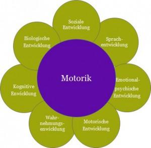 Die Wechselwirkung zwischen Motorik und anderen Entwicklungsbereichen