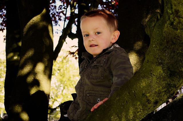 Junge auf Baum