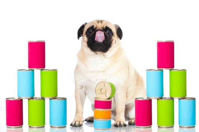 Hund mit Koservendosen