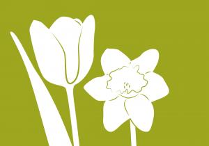 Tulpen_Narzissen